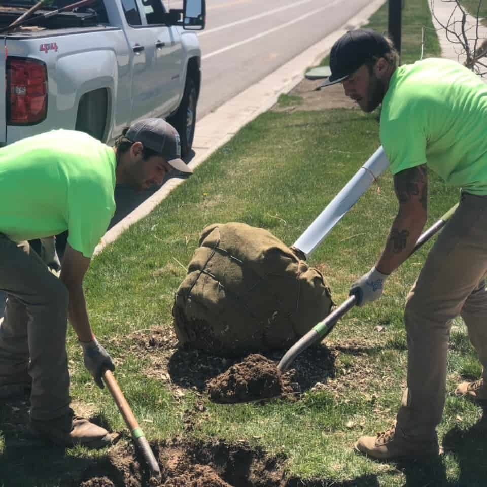 SuperTrees Services Tree Planting
