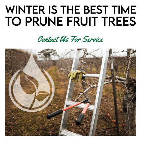 SuperTrees Services - Pruning---Mobile