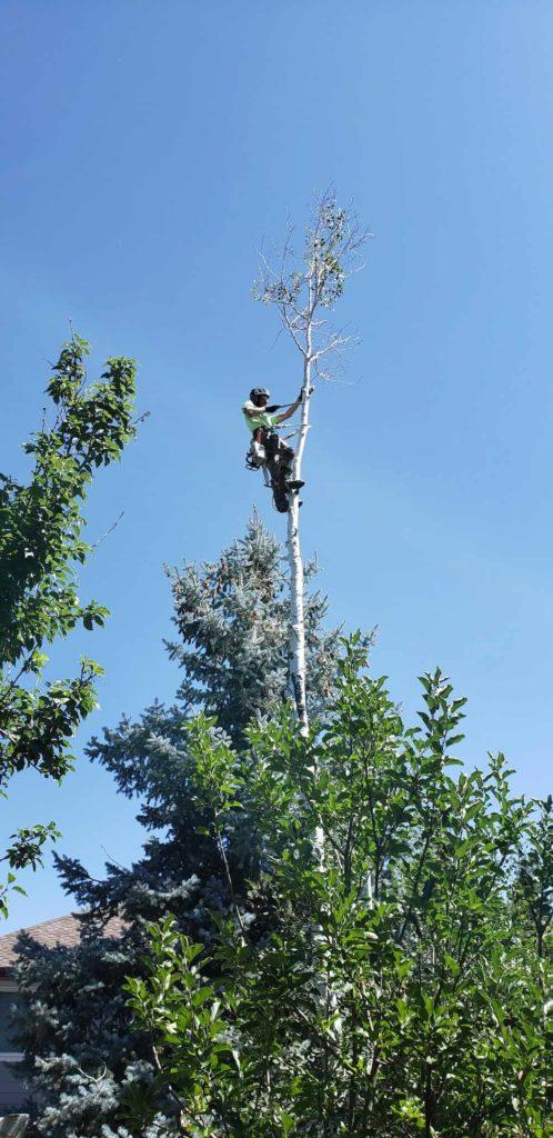 SuperTrees® Colorado 5